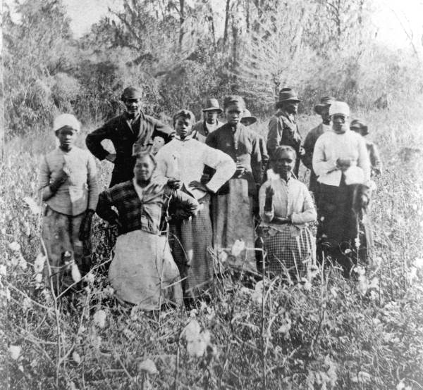African American Laborers in Cotton Field